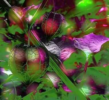Purple Passion Fusion by Crissy Anderson
