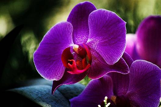 Purple Passion by Helen Carson