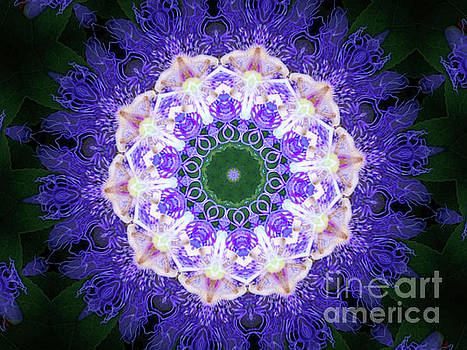Purple Perfection by Shirley Moravec