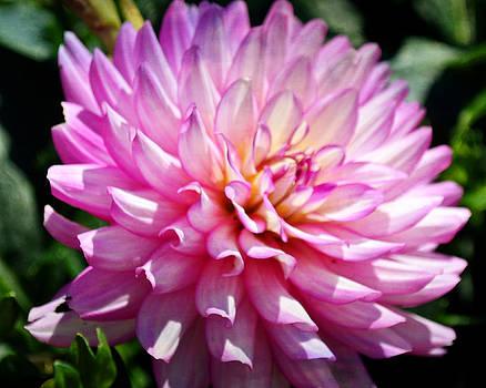 Purple Petals 8x10 by Marty Koch
