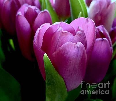 Purple Petals by Glennis Siverson