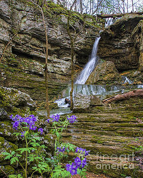 Barbara Bowen - Purple Phalcelia at Pocket Branch Falls