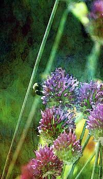 Purple Prairie Clover Flowers 1285 IDP_2 by Steven Ward