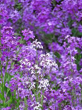 Purple Profusion by Lori Frisch