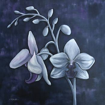 Purple Rain by Ryan Salo
