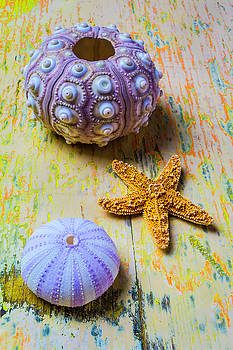 Purple Sea Urchin And Starfish by Garry Gay