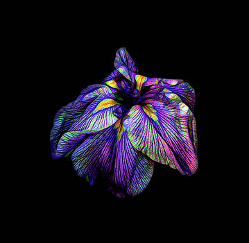 Purple Siberian Iris Flower Neon Abstract by David Gn