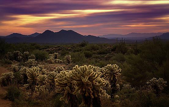 Saija Lehtonen - Purple Sonoran Skies at Sunset