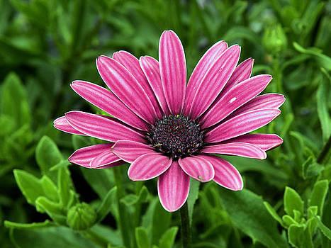 Purple Stripes by Julie Behm