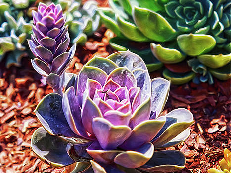 Purple Succulents by Doctor MEHTA
