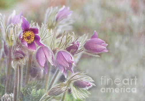 Purple Summers Floral Garden by Nikki Vig