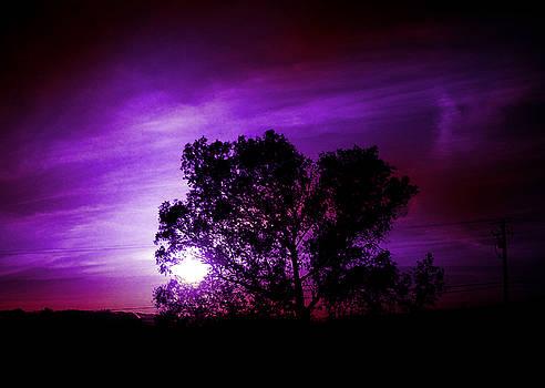 Purple Sunset by Robert Ball