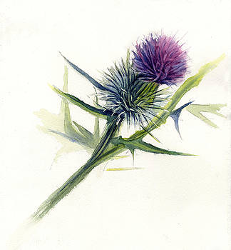 Purple Thistle by Leslie Redhead