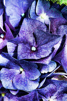 Purple to Blue  by Kathy Clark