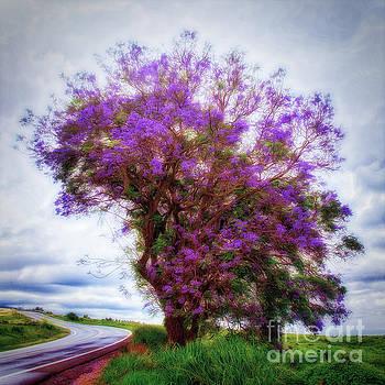 Purple Tree  ... by Chuck Caramella
