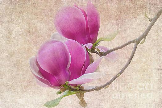 Heiko Koehrer-Wagner - Purple Tulip Magnolia