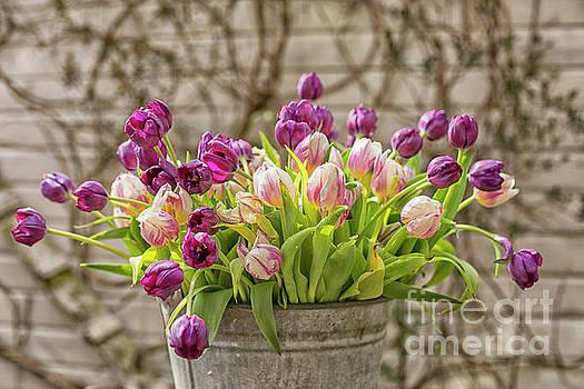 Patricia Hofmeester - Purple tulips in a bucket