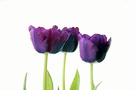 Purple Tulips by Lee Fortier
