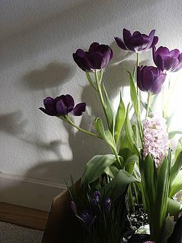 Purple Tulips by Nabila Khanam