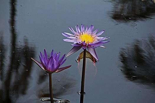 Purple Two-step by Michiale Schneider