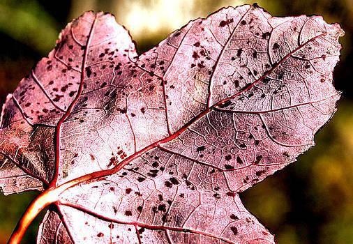 Karen Scovill - Purple Vein