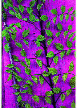 Purple Wall and Leaves by Alan Mogensen