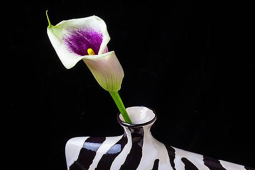 Purple White Calla In Vase by Garry Gay