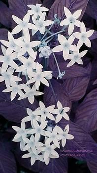 Rizwana A Mundewadi - Purple White Floral Magic