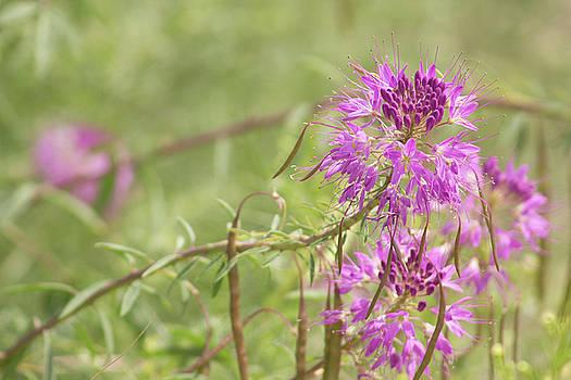 Purple Wild Flowers 2 by Jodi Vetter