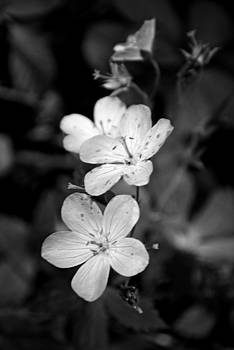 Michelle  BarlondSmith - Purple WildFlower in Black and White