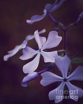 Purple Wildflower by Jamie Kerns