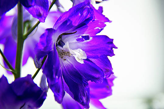 Purpled by David Sutton