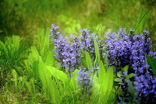 Darlene Bell - Purplescape