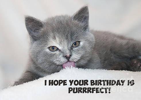 JH Designs - Purrfect Birthday Cat