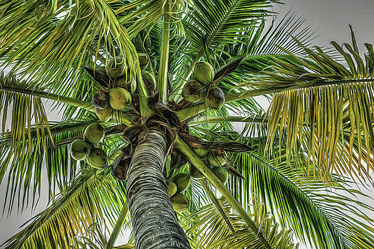 Put the Lime In the Coconut by Donna Kennedy