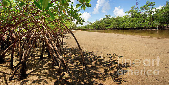 Putting Down Roots - Mangrove Coast in South Florida by Matt Tilghman