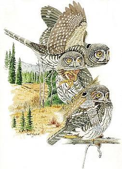 Pygmy-owl by Scott Rashid