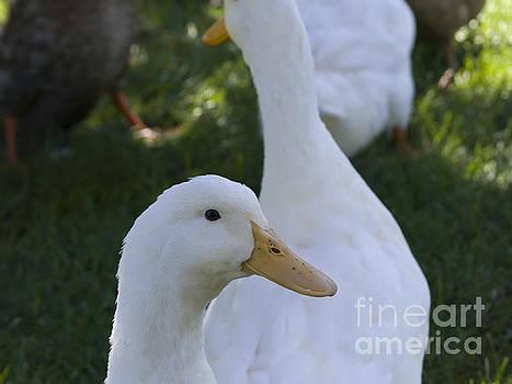 Quackers by Tara Lynn