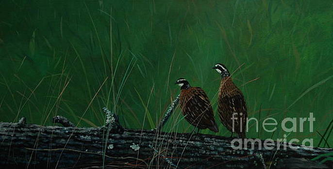 Quail Afternoon by Michael Nowak