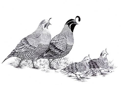 Quail Family Evening Stroll by Alice Chen