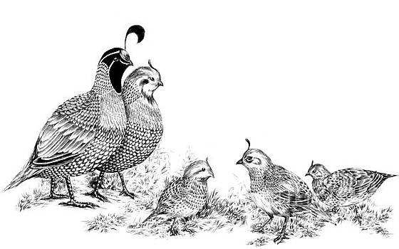 Quail Family Outing by Alice Chen