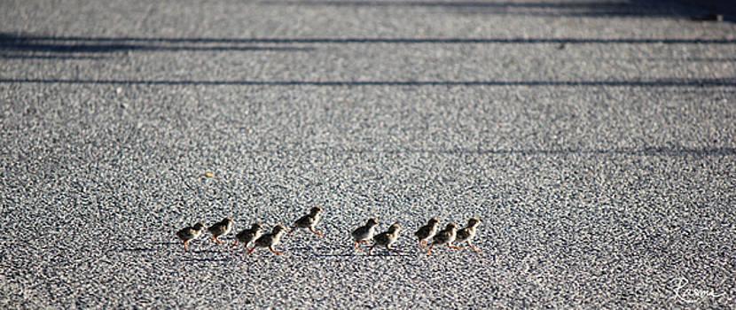 Rasma Bertz - Quail Lines