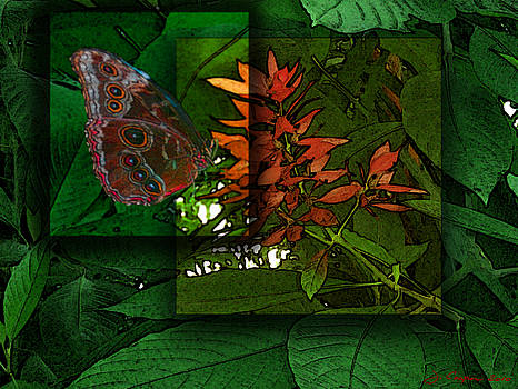 Quantum Butterfly by Jerry Cooper