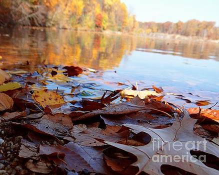 Quarry Leaves by Mike Bruckman