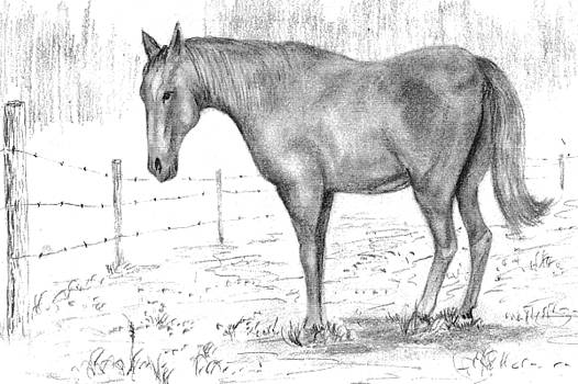 Quarter Horse by Barney Hedrick