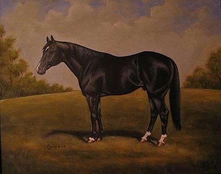 Quarterhorse Stallion by Birgit Schnapp