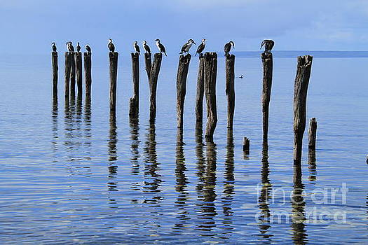 Quay Rest by Stephen Mitchell