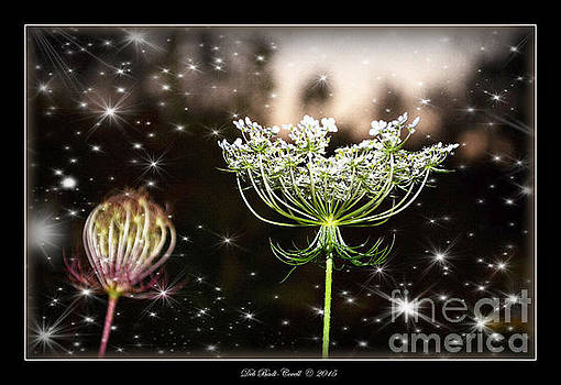 Queen Annes Lace and Sparkles at Dusk by Deb Badt-Covell