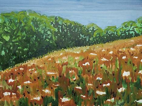 Queen Anne's Lace Field by Bethany Lee