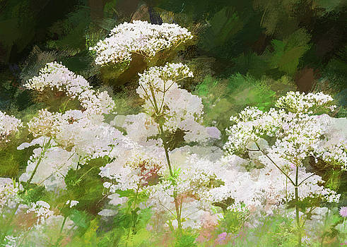 Queen Annes Lace. by Rob Huntley